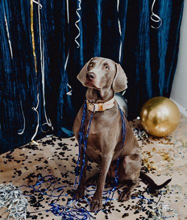 dog-sitting-in-confetti-needing-behavior-modification