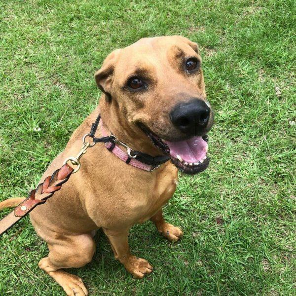 Lucki, Mixed Breed, Companion Dog Training, Sarasota, Florida